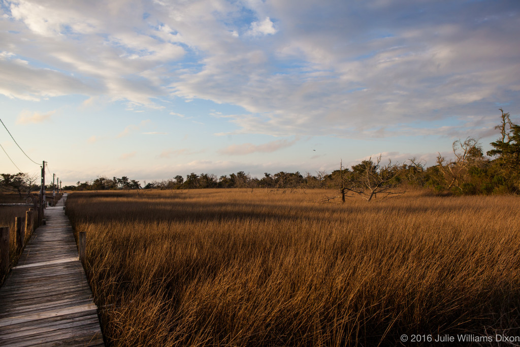 marsh backside of Ocracoke